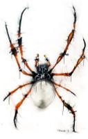 Orb Weaver Spider Original