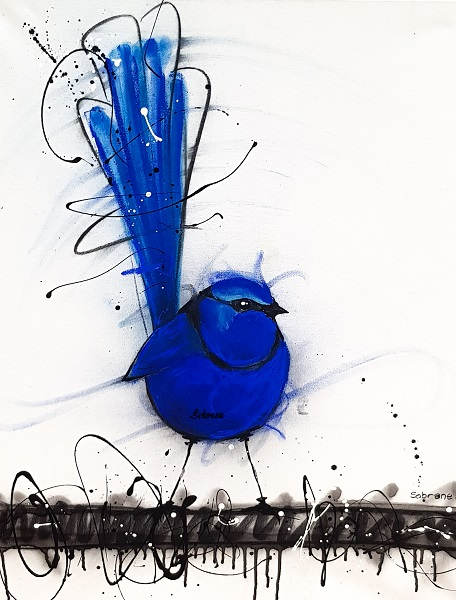 Splendid Blue Wren on Canvas. Sobrane Original