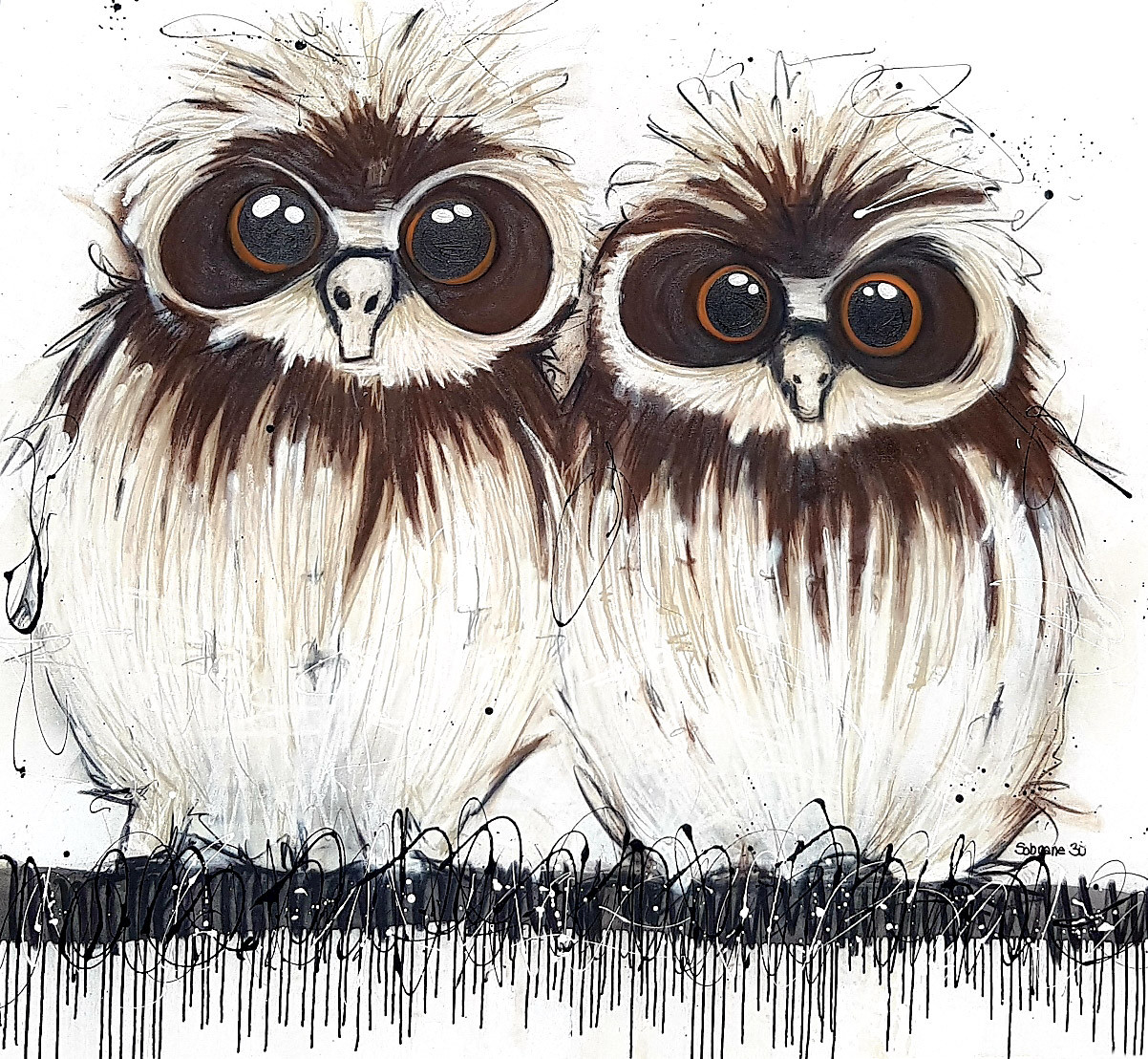 Boobook Owls