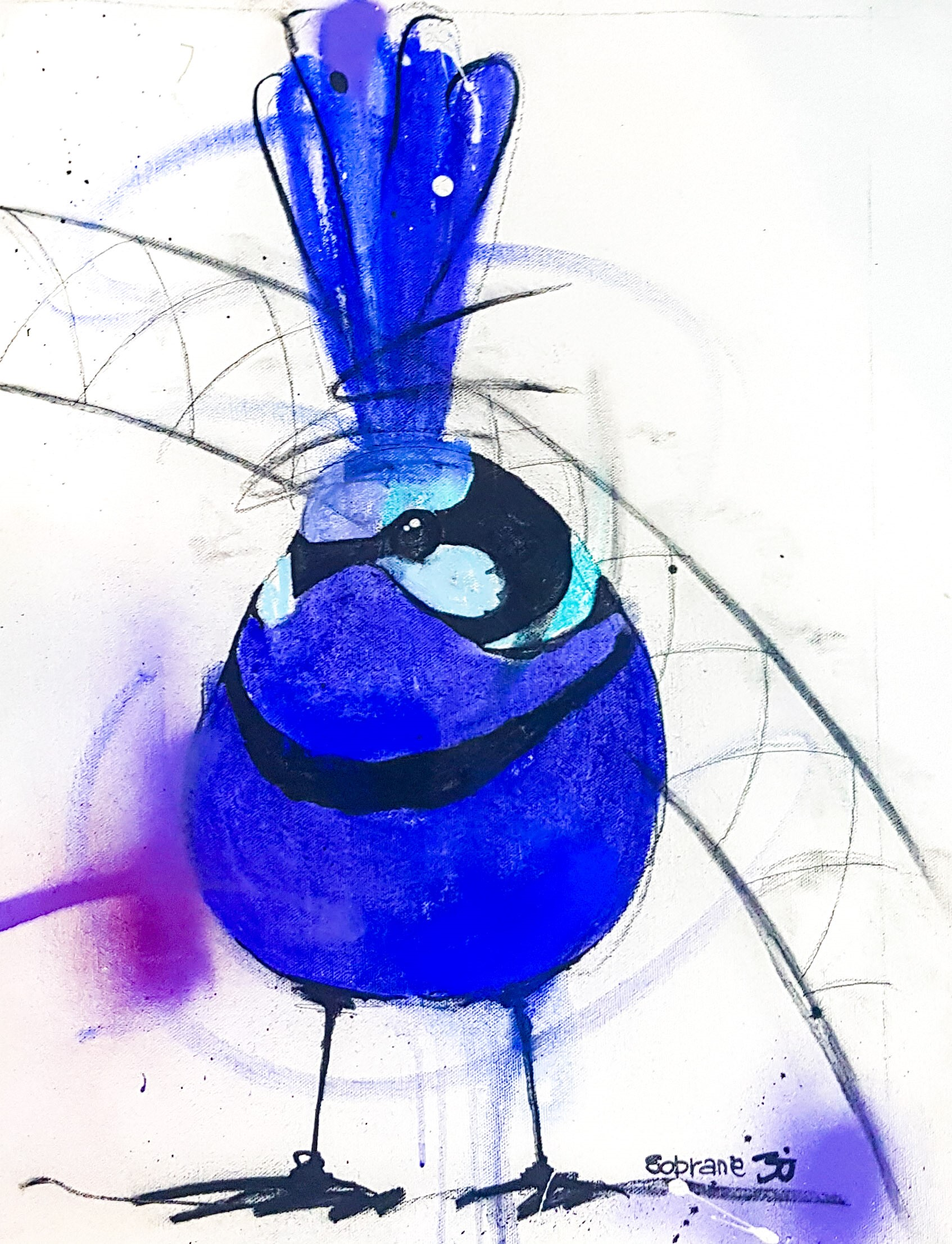Splendid Blue Wren III Original Original artwork completed in Pastels, spray-paint, charcoal and enamel.  Artwork is on canvas 53 x 38 cm FREE SHIPPING ON ALL ORIGINALS WORLDWIDE