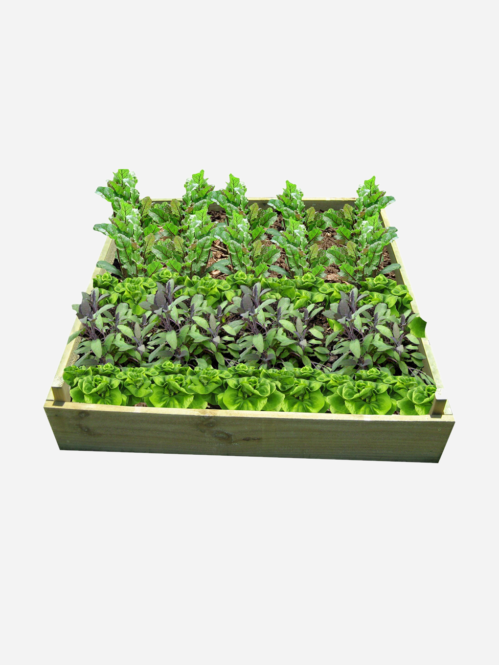 Get Growing Okiwi Raised Garden Bed 1200x1200 Raised Gardens And Planter Boxes Buy Online At Gubba