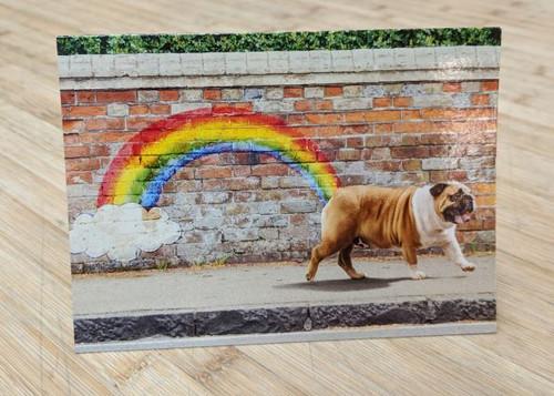 Avanti Card Birthday Dog Rainbow Bulldog