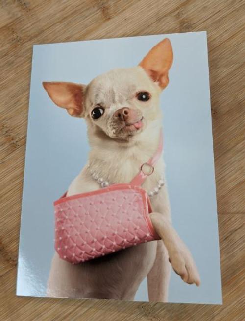 Avanti Card Get Well Chihuahua Pink Brace