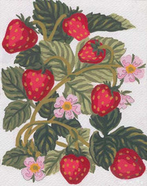 Strawberries Canvas only By Grafitec