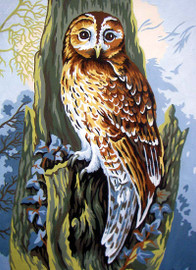 Owl Canvas only By Grafitec