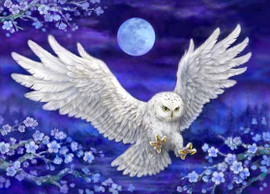 Moonlight Owl Canvas only By Grafitec