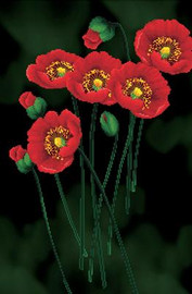 Red Poppies on black No Count Cross Stitch Kit By Riolis