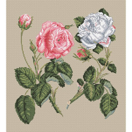 Pink Centifolia Rose & White  Cross Stitch Kit Unique Rose by Stark