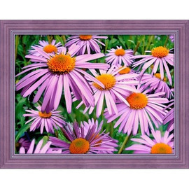Purple Chamomiles Diamond Painting Kit