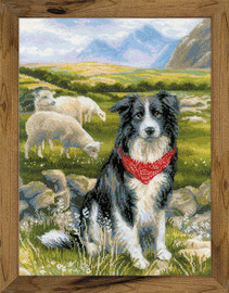 Border Collie Cross Stitch Kit By Riolis