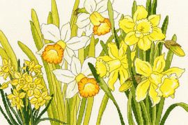 Daffodil Blooms Cross Stitch Kit by Bothy Threads