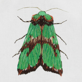 Green Moth Freestyle Embroidery Kit by Panna