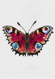 Peacock Butterfly Freestyle Embroidery Kit by Panna