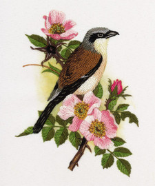 Red-Backed Shrike Freestyle Embroidery Kit by Panna