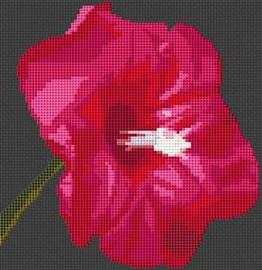 Morning Glory Flower Cross Stitch Chart