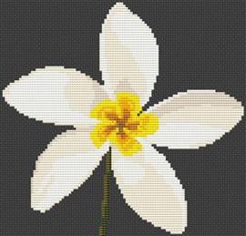 Plumeria Flower Cross Stitch Chart