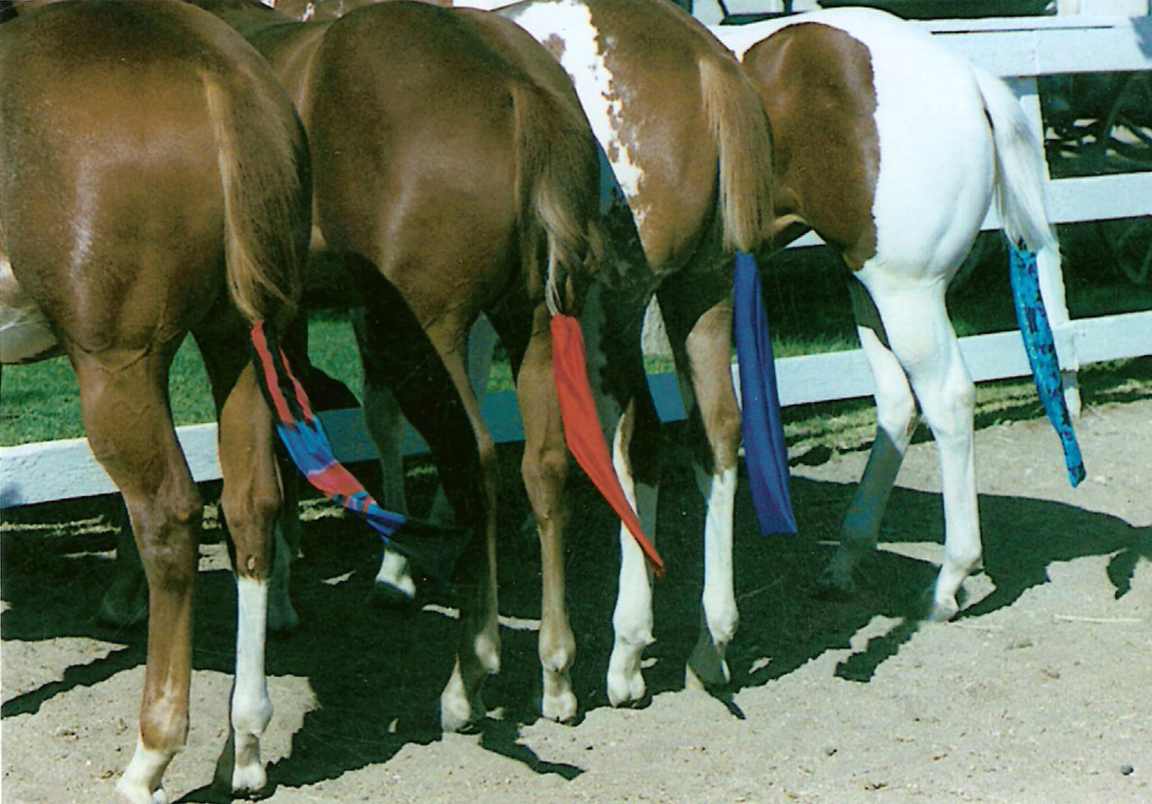 Lycra Tail bags for horses