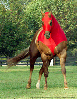 10 oz. NFL Tough stretch Lycra horse hood with zipper By Robinhoods