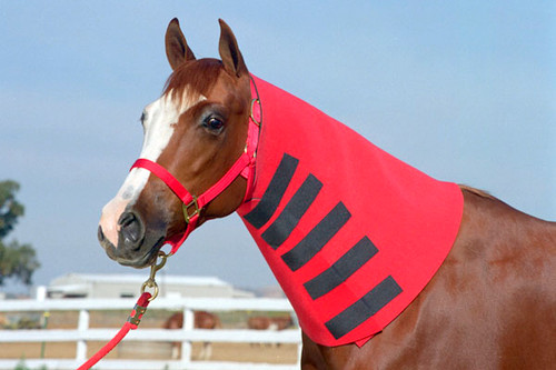 Neoprene Neck sweat for horses,