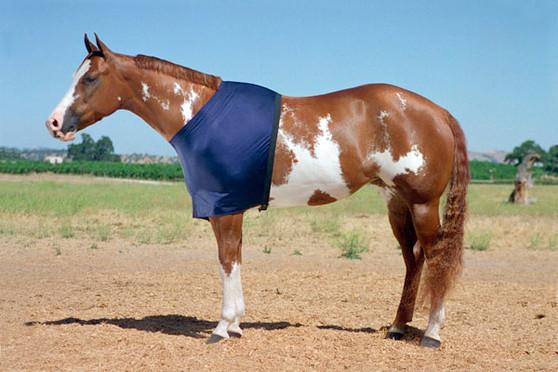 Stretch Lycra Shoulder Guard for Horses, Equine Shoulder Guard