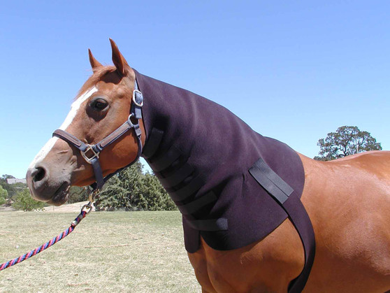 Neck & Shoulder Sweat for horses by Robinhoods