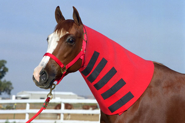 Robinhoods Neck Sweats for Horses