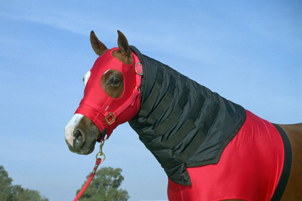 Robinhoods Neck Warmer for Horses
