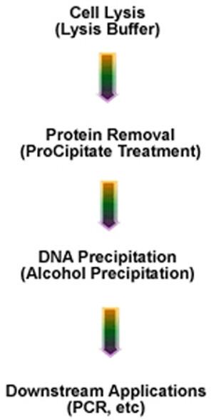 ProPrep™ Genomic 100 Kit (formerly ProPrep Genomic 96)