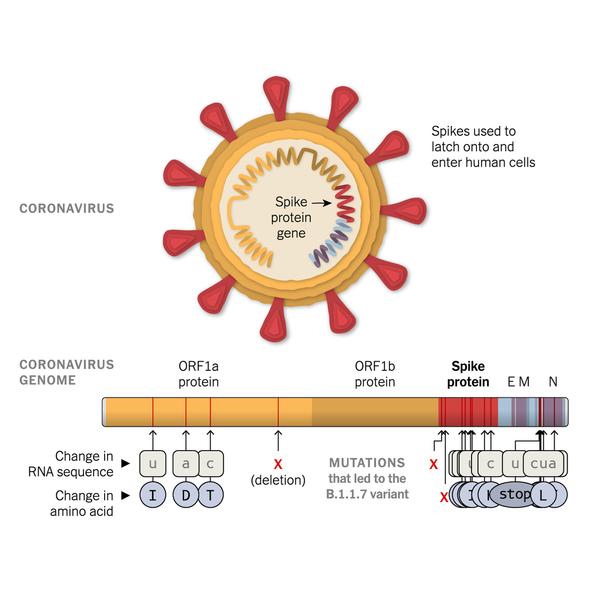 SARS-CoV-2 full-length Trimeric Spike Recombinant Antigen B.1.1.7 Mutation (UK Variant)