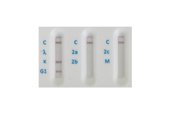 Rat Antibody Isotyping card