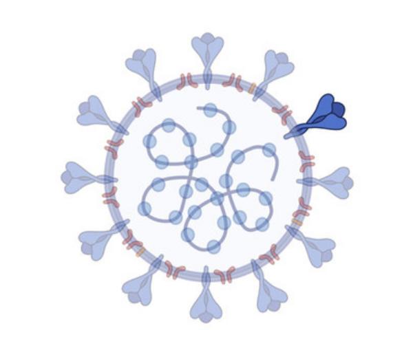 SARS-CoV-2 RBD of Spike protein P.1, K417T, E484K, N501Y – 484K.V2 – BR Variant
