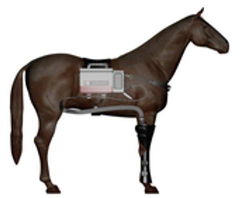 Equine Dual Cold Compression