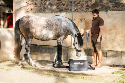 Equine veterinary therapeutic devices