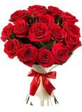12 Red Luxury Ecuadorian Roses