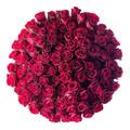 100 Ecuadorian Roses Giant Bouquet