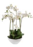 Orchids Garden (5)