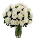 24 White Ecuadorian Roses