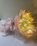 20 Holland Tulips Fairy Lights