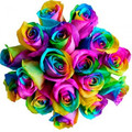 18 Rainbow Ecuadorian Roses