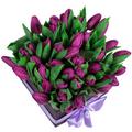 20 Violet Tulips Box