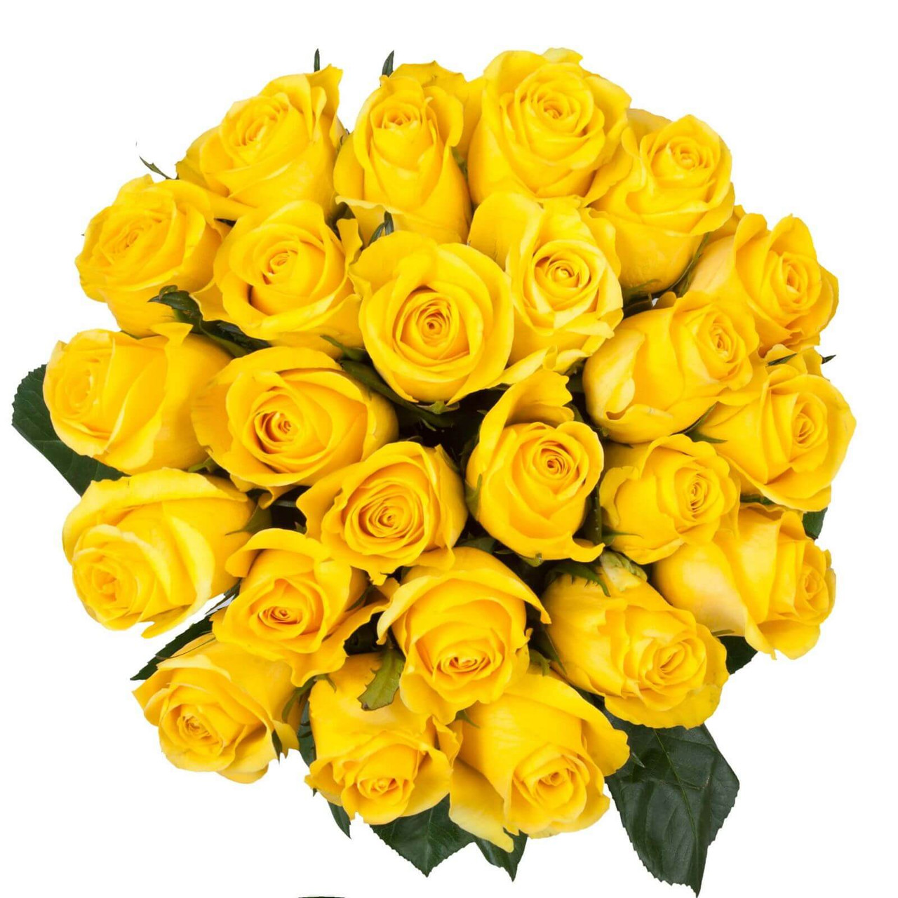 24 Yellow Ecuadorian Roses
