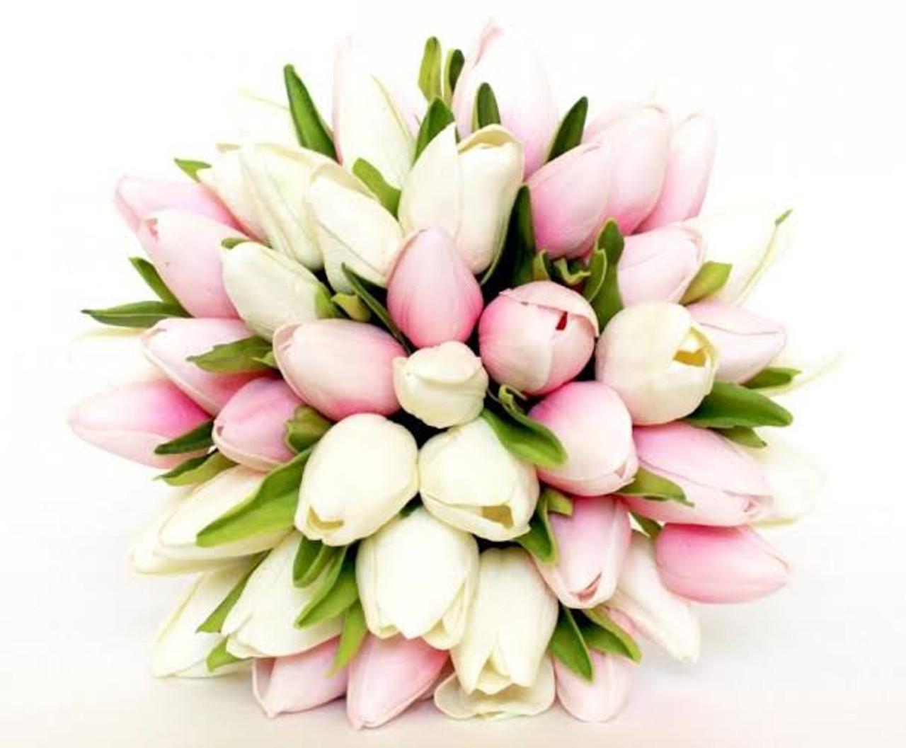 20 Pink & White Tulips
