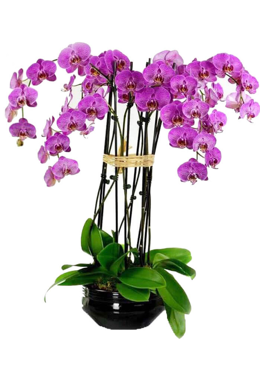 Orchids Oasis (6)