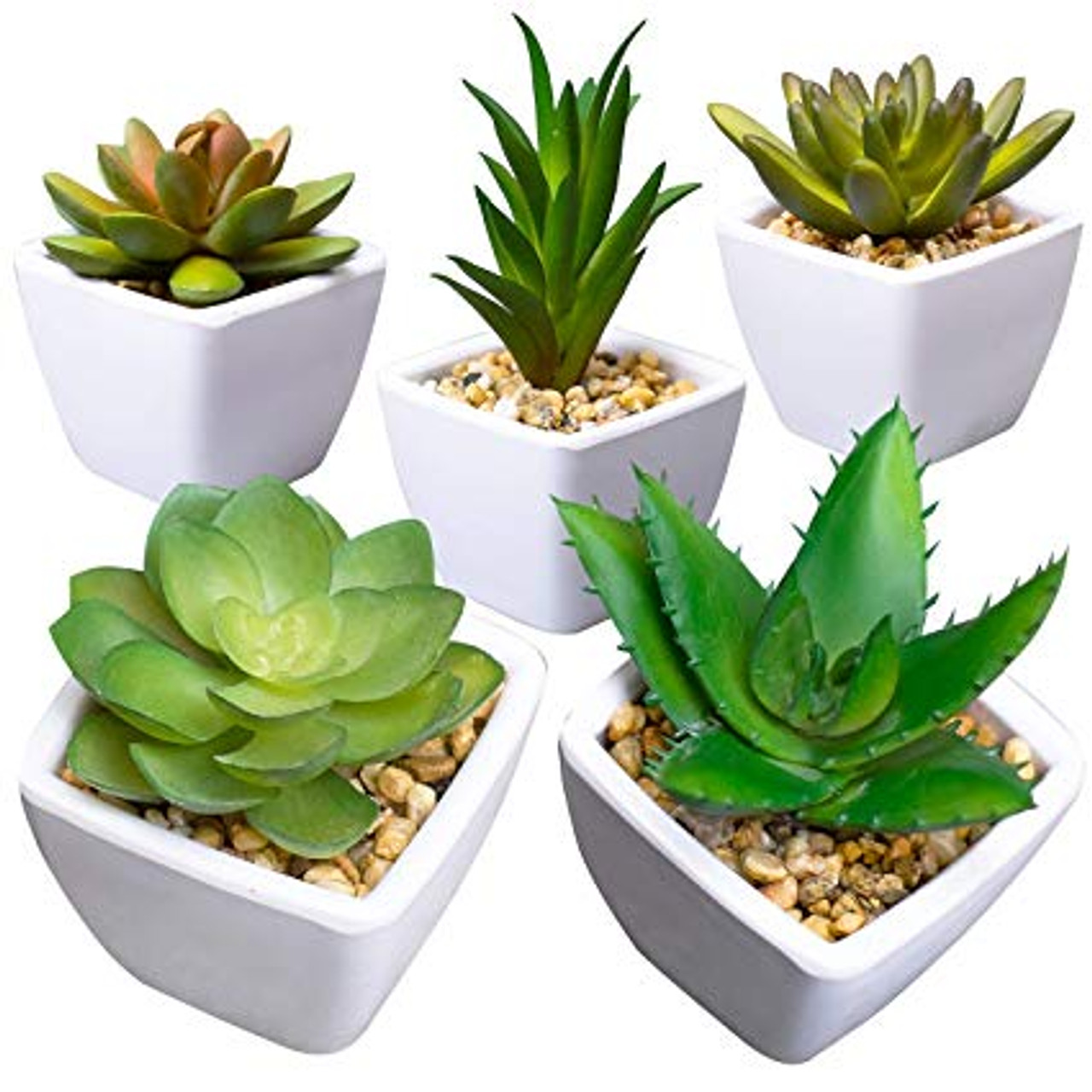 Assorted Succulents Package