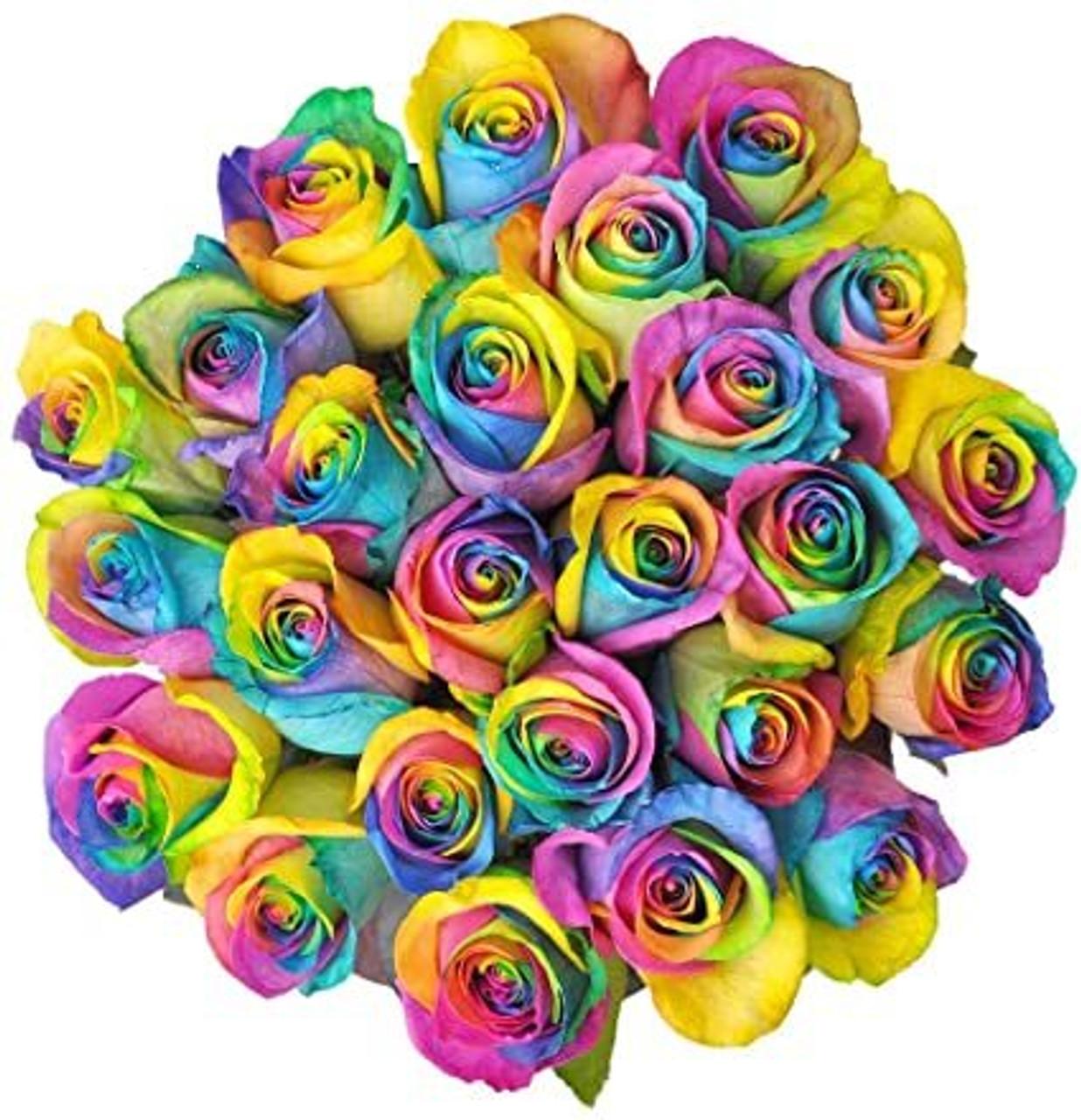 24 Rainbow Ecuadorian Roses
