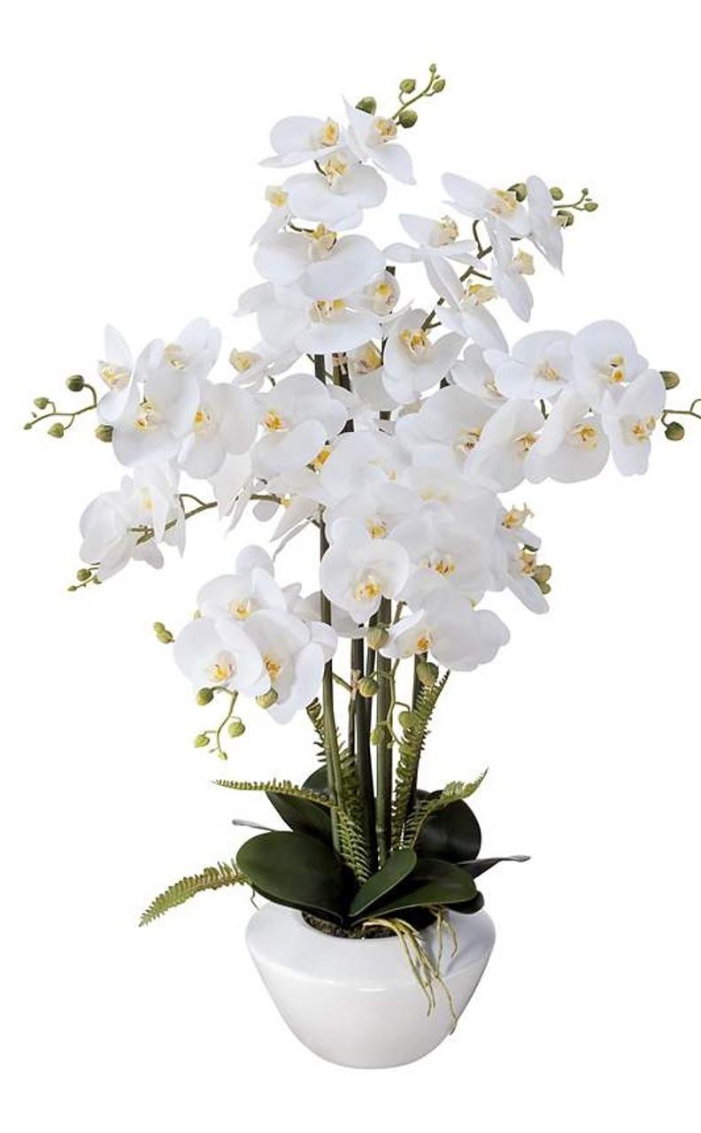 Orchid Diva (4)