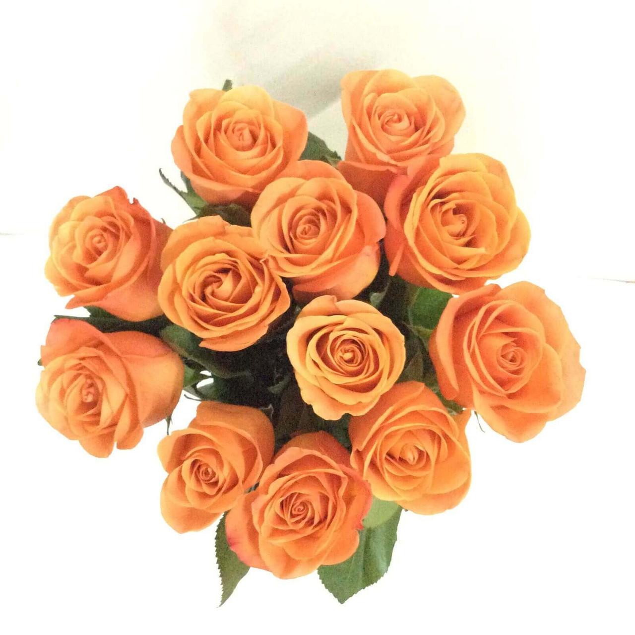 12 Orange Ecuadorian Roses