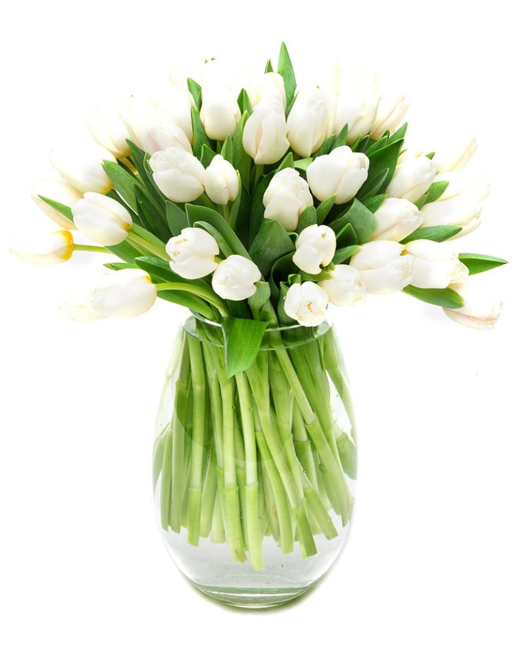 30 White Tulips