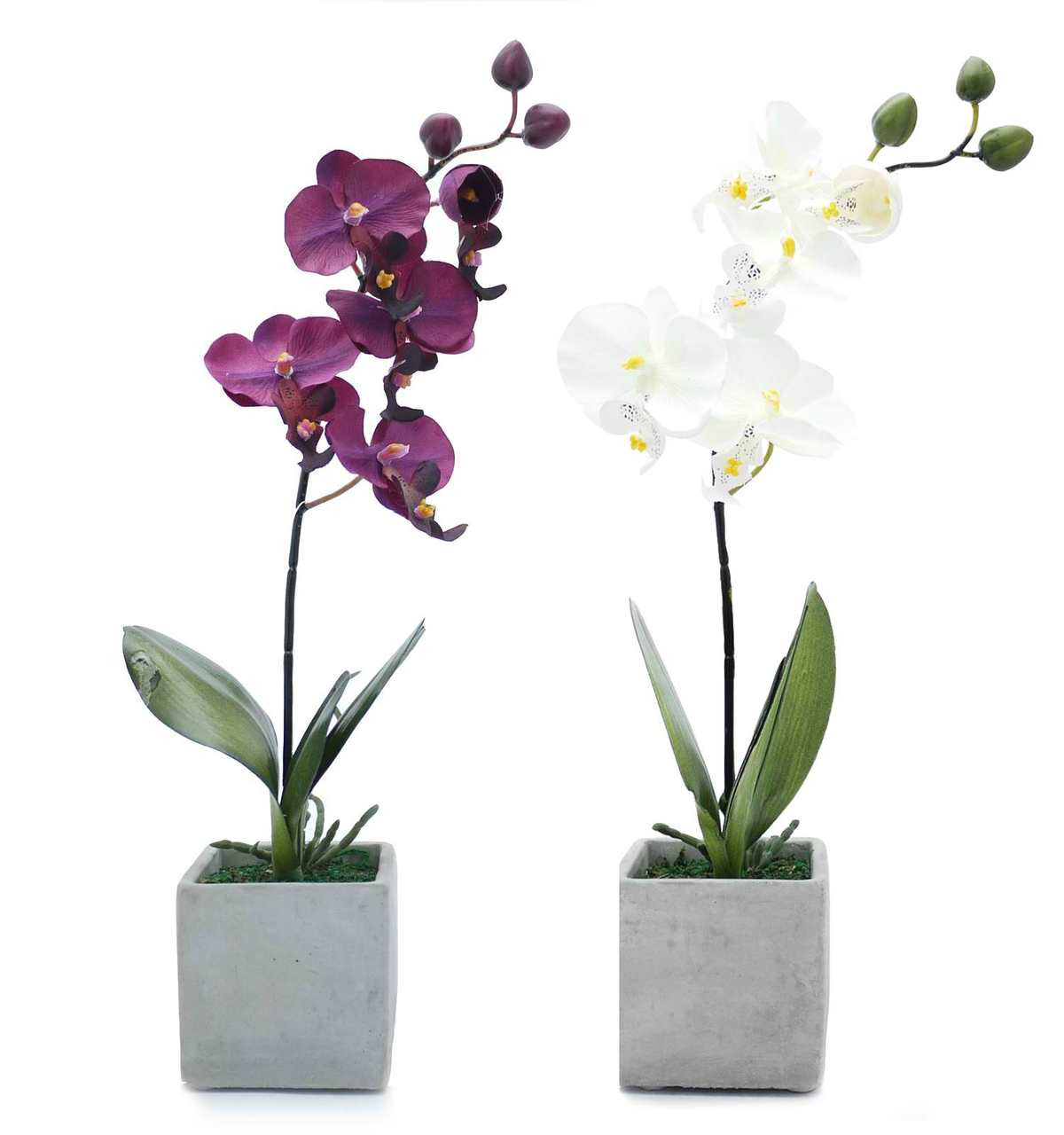 Orchids Package