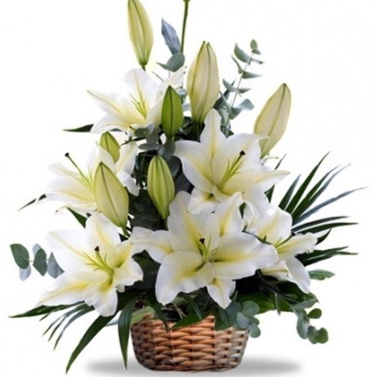 Casablanca Stargazer Lilies Basket